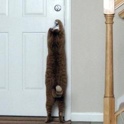 1 chat-qui-sait-ouvrir-une-porte