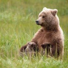 maman ours allaitante