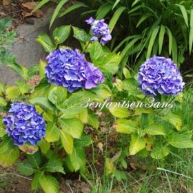 3 enfants en 3 ans vie de maman 4 fleurs