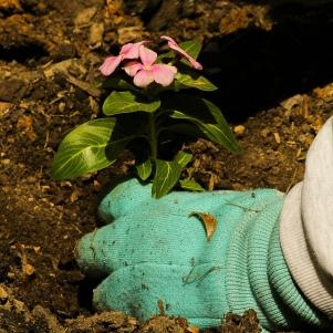 planting-109014_1280