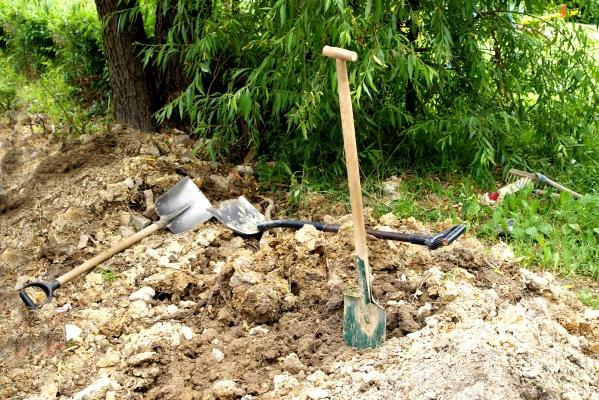 work-tree-nature-foliage-green-mud-486161-pxhere.com.jpg